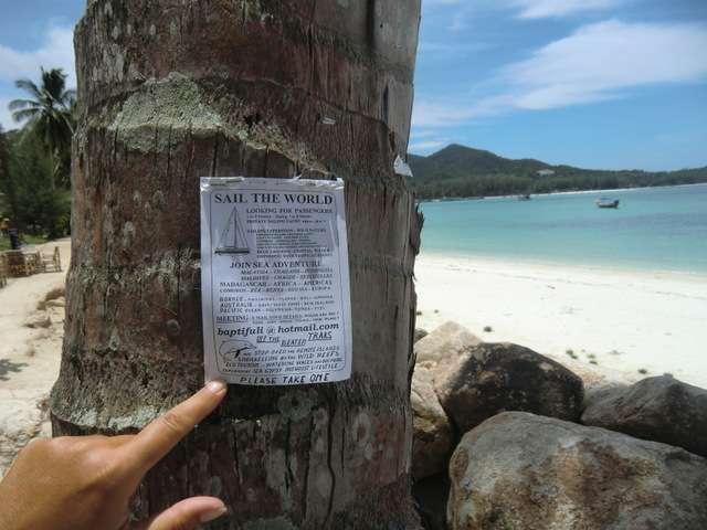 Mehrere Blöcke waren an verschiedene Bäume getackert........Segler sucht Mitreisende für Weltumsegelung....cool !!! Wollen wir mal anrufen ???